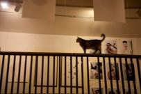 AP1-cat-railing