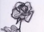 19_Tromble_Rose_12_1995